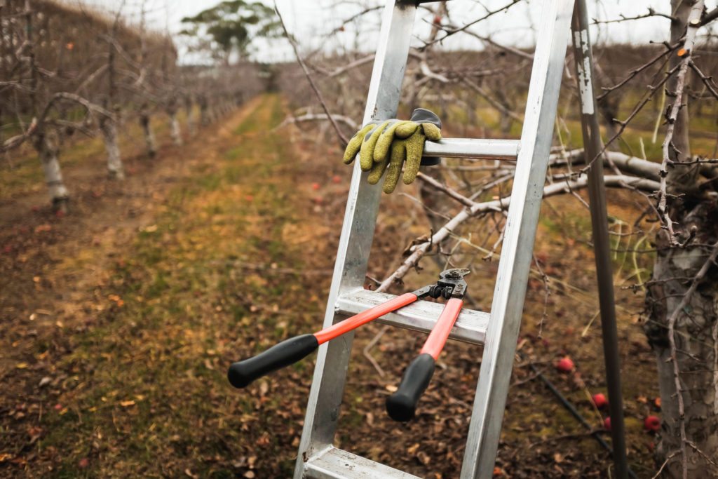 Gloves and Pruners hanging on a Ladder in an orchard