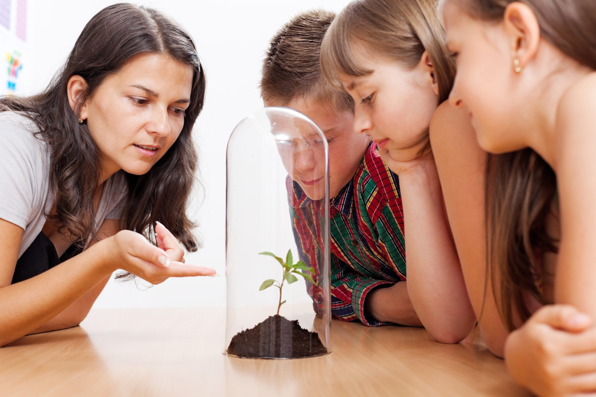 women teaching three children about soil, plant, and horticulture with the use of a small pile of soil with a tomato plant growing out of it
